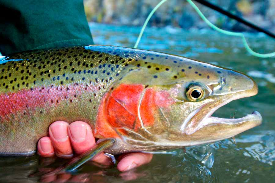 middle-creek-ranch-fishing